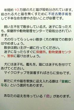 Ami_2